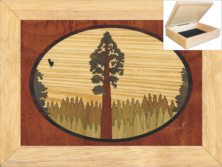 Redwood Sequoia Jewelry Box 6x8
