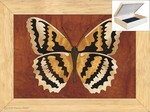 Butterfly Trinket Box 4x5