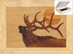 Bugling Elk Head - Jewelry Box 4x5