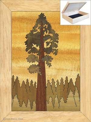 Giant Redwood Sequoia - Jewelry Box 4x5