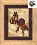 Iris and Butterfly - Jewelry Box 10x12