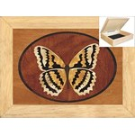 The Butterfly - Jewelry Box 6x8